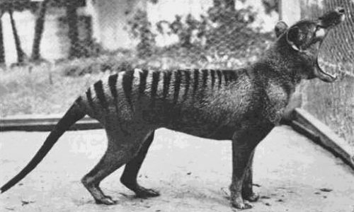 7 Amazing Animals That Went Extinct in the Last 200 Years