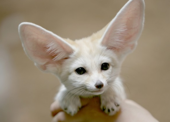 The 8 Most Adorable Creatures You Have Never Heard of