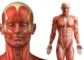 50 Quick and Fascinating Facts About the Human Body