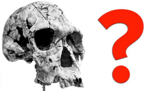 25 Unsolved Mysteries Of Evolution